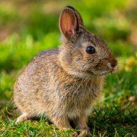 bunny-5014814_1920